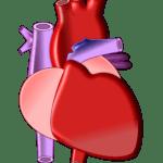 heart-497674